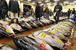 「国のマグロ漁獲制限方針から垣間見える政治不在の現実」(漁業問題)